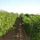 ayudas agrarias valencia