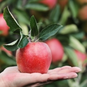 registro industria agroalimentaria