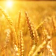 industria agroalimentaria, proyectos de ingenieria, ingenierios agronomos valencia