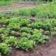 ayudas agricultura valencia, ayudas agrarias valencia, ayudas para agricultores, ayudas agroalimentarias