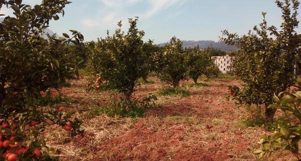 ayudas agricultura ecologica valencia, PERITACIONES AGRICOLAS VALENCIA, PERITACIONES JUDICIALES VALENCIA, PERITO AGRICOLA VALENCIA