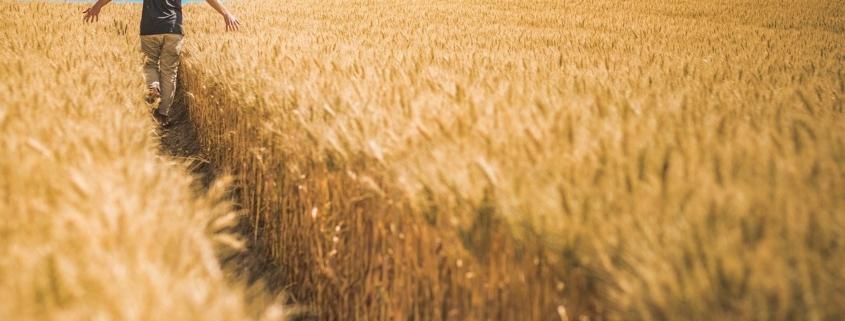 ayudas agricultura ecológica valencia